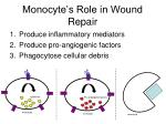 monocyte s role in wound repair1