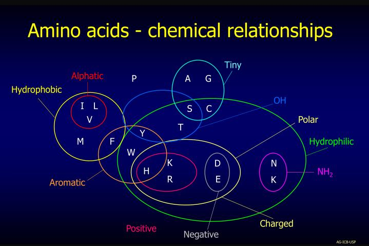 Amino acids - chemical relationships