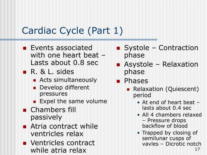 Events associated with one heart beat – Lasts about 0.8 sec