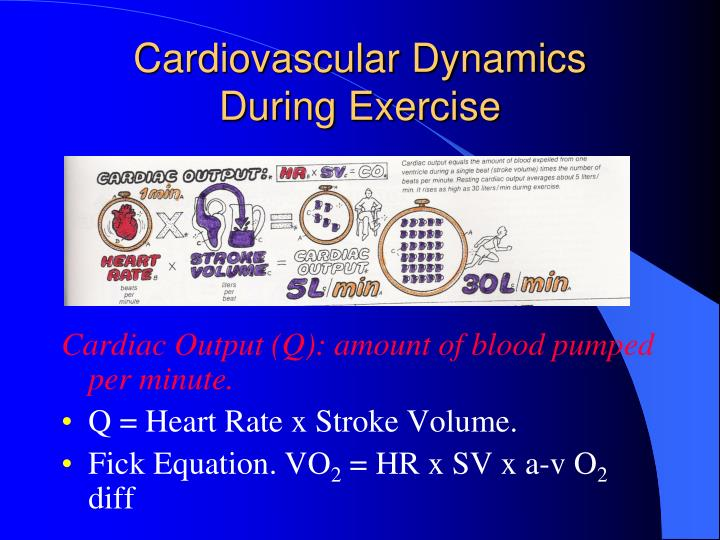 Cardiovascular dynamics during exercise