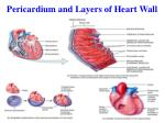 pericardium and layers of heart wall