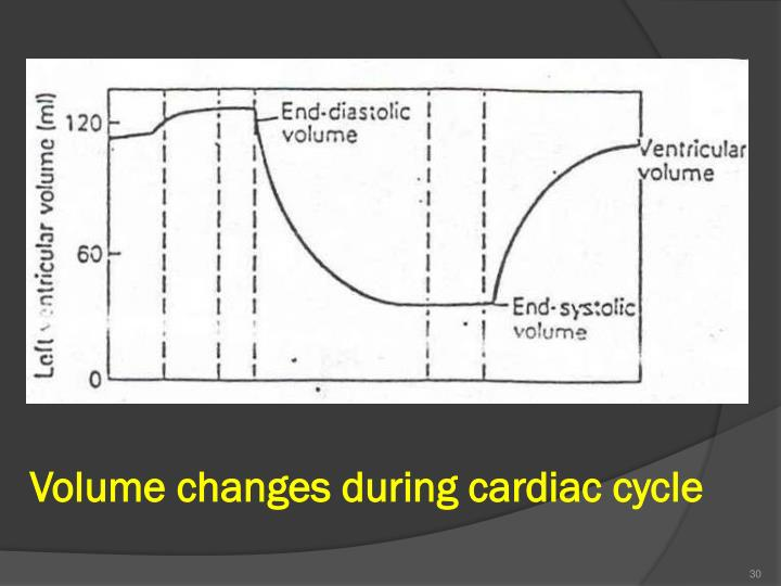 Volume changes during cardiac cycle