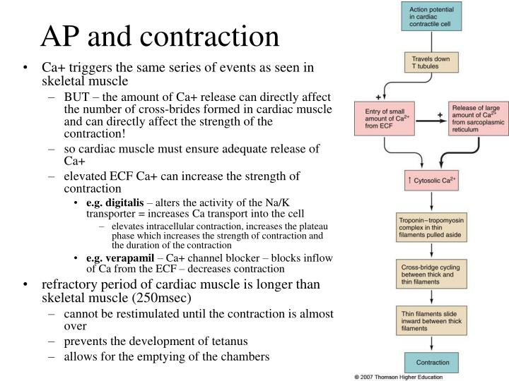 AP and contraction