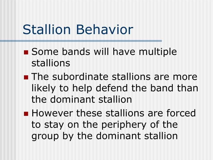 Stallion Behavior