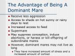 the advantage of being a dominant mare