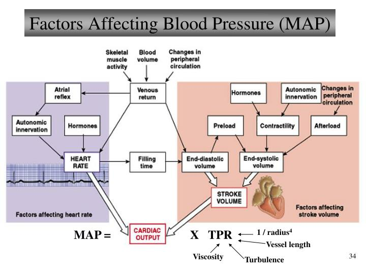 Factors Affecting Blood Pressure (MAP)