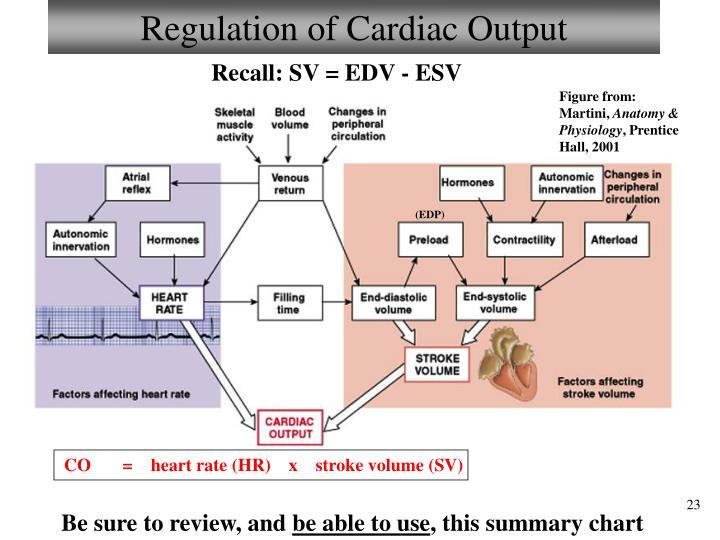 Regulation of Cardiac Output