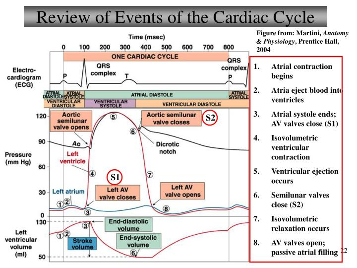 Review of Events of the Cardiac Cycle