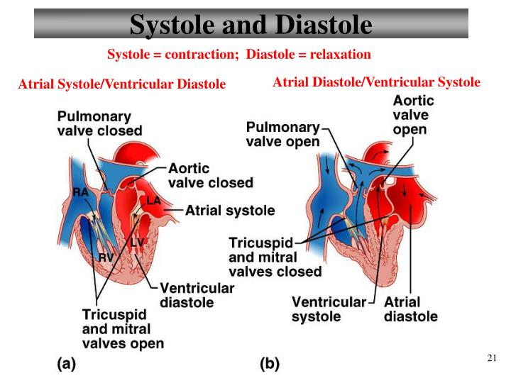 Systole and Diastole