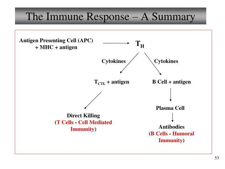 The Immune Response – A Summary