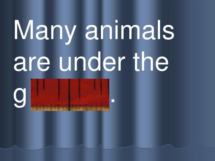 Many animals are under the   g r ound.