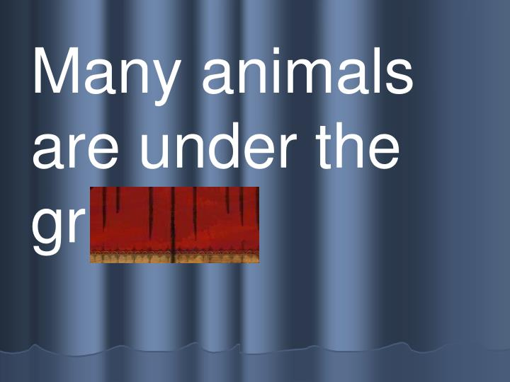 Many animals are under the   gr ound.