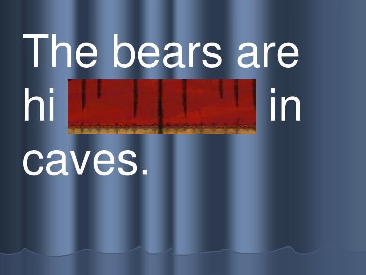 The bears are  hi bernating in caves.