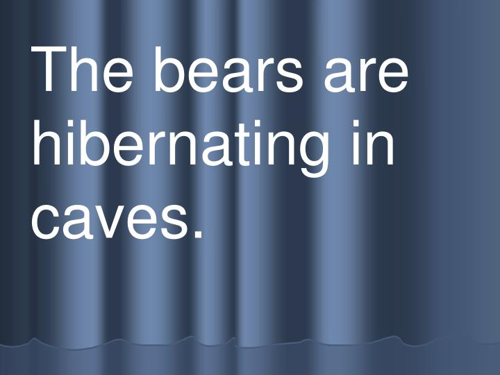 The bears are  hibernating in caves.