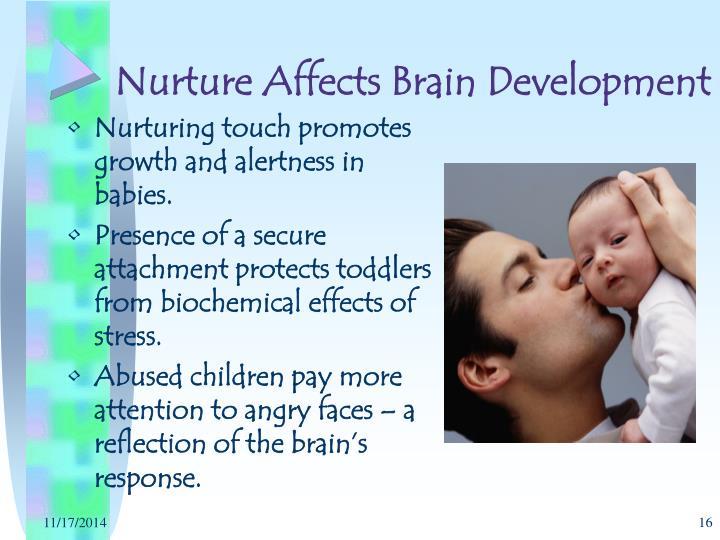 Nurture Affects Brain Development