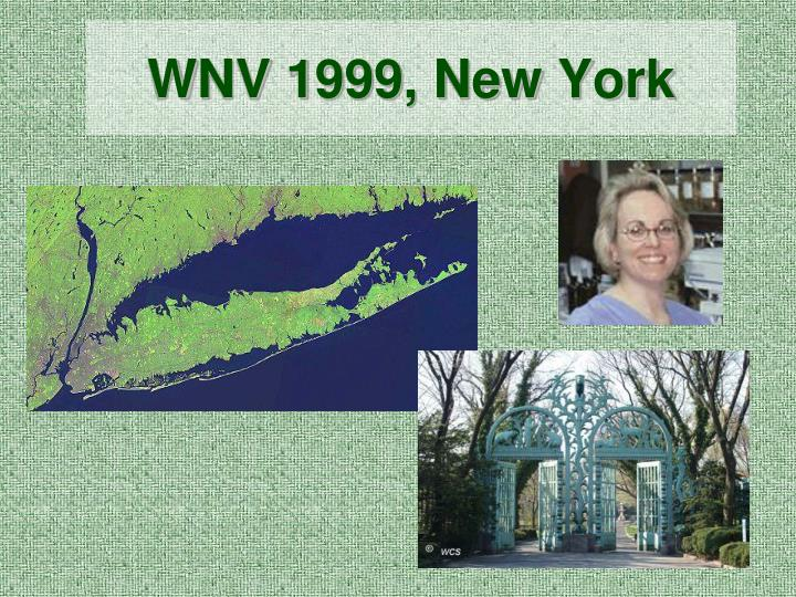 Wnv 1999 new york
