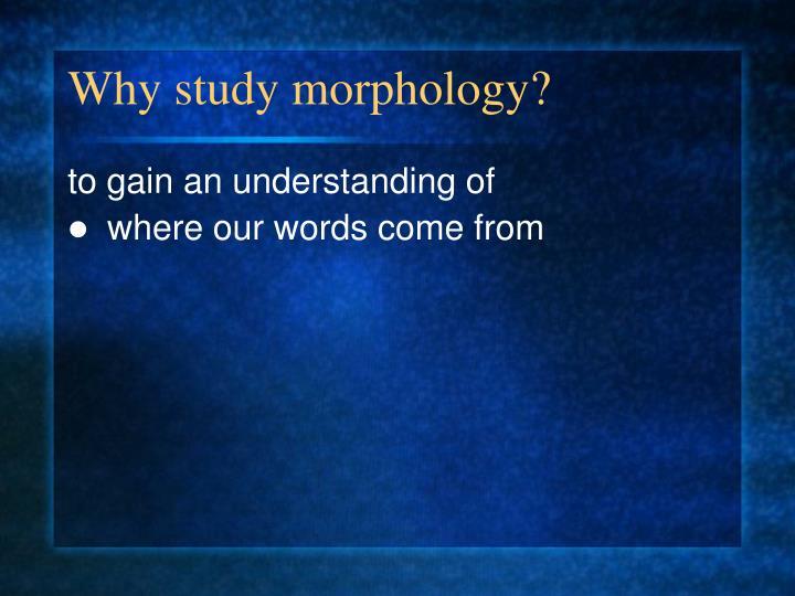Why study morphology?