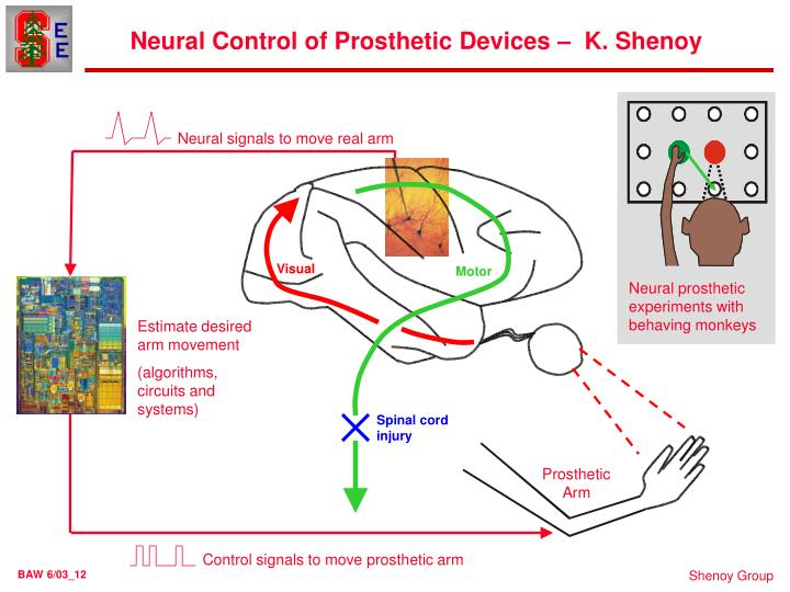 Neural Control of Prosthetic Devices –  K. Shenoy
