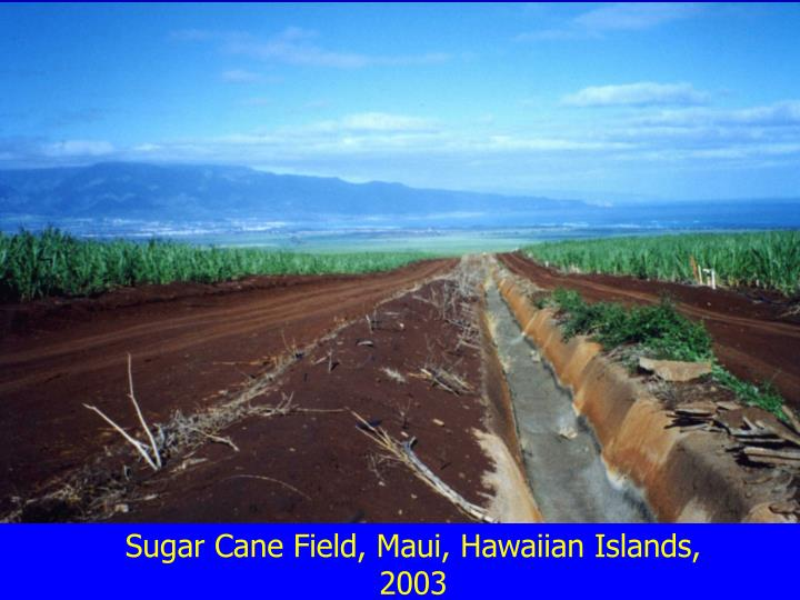 Sugar Cane Field, Maui, Hawaiian Islands, 2003