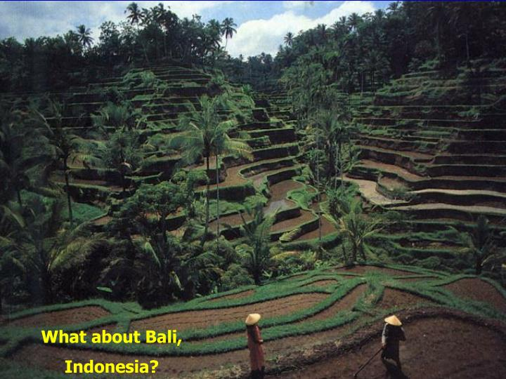What about Bali,