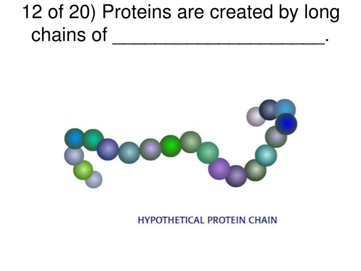 12 of 20) Proteins are created by long chains of ____________________.