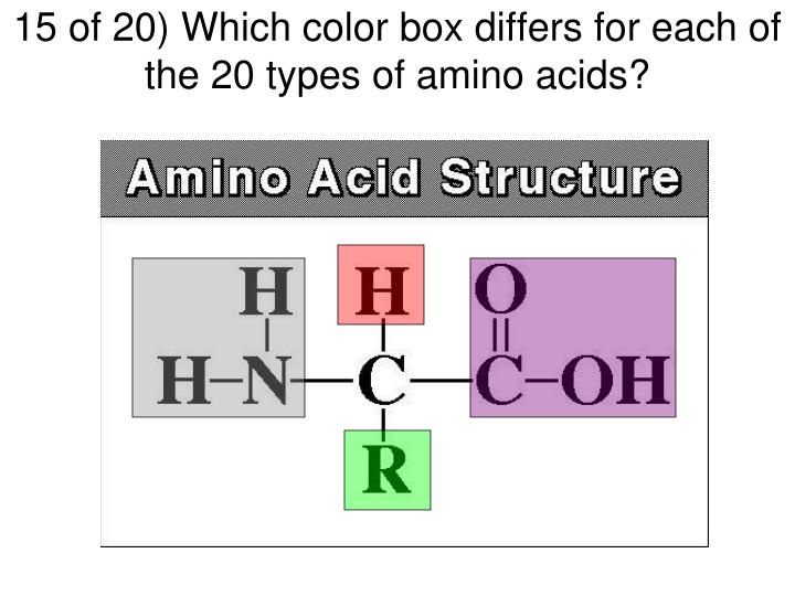15 of 20) Which color box differs for each of the 20 types of amino acids?