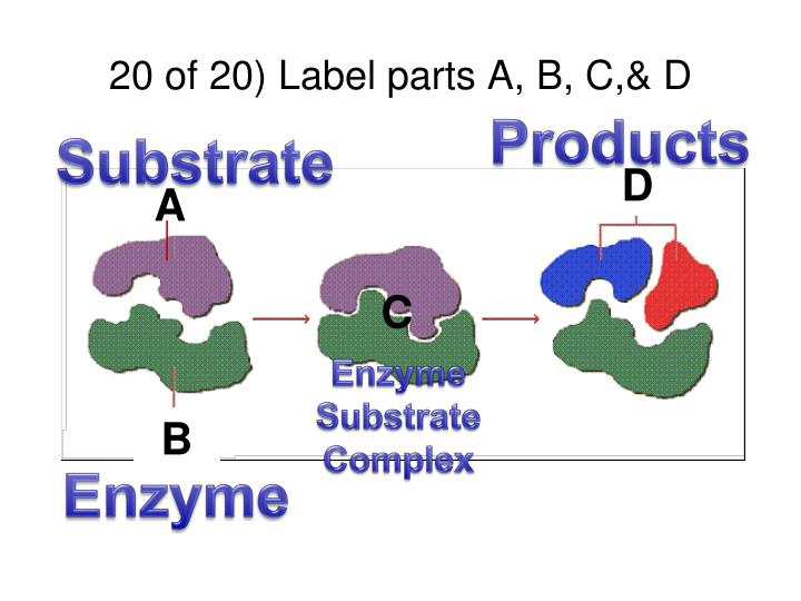 20 of 20) Label parts A, B, C,& D