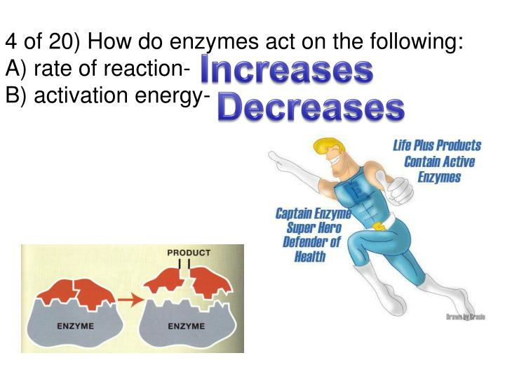 4 of 20) How do enzymes act on the following: