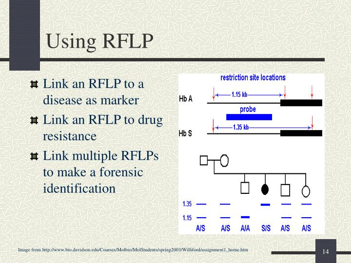 Using RFLP