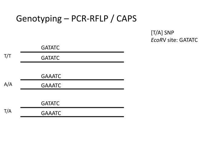 Genotyping pcr rflp caps