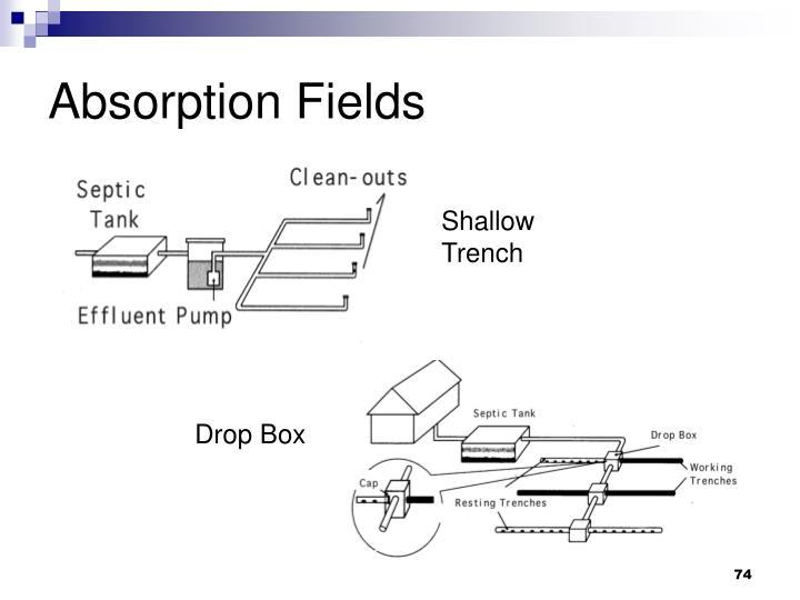 Absorption Fields
