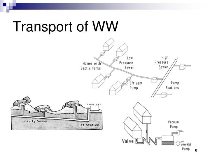 Transport of WW