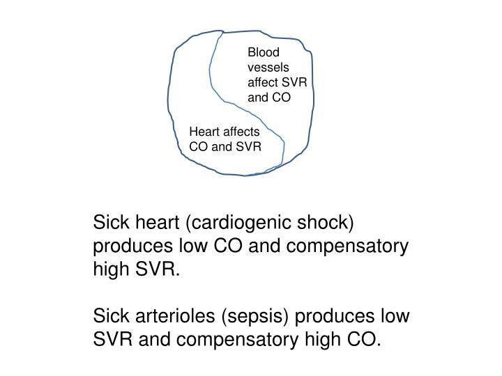 Blood vessels affect SVR and CO