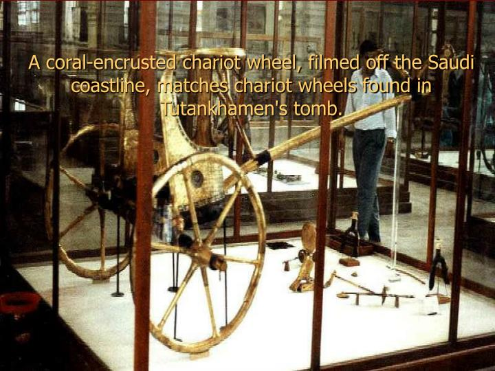 A coral-encrusted chariot wheel, filmed off the Saudi coastline, matches chariot wheels found in Tutankhamen's tomb.