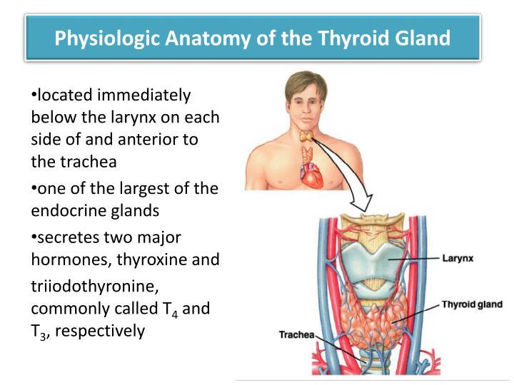 Physiologic anatomy of the thyroid gland