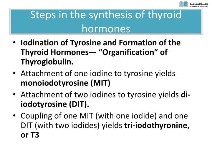 Steps in the synthesis of thyroid hormones