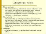 adrenal cortex review