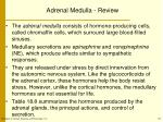 adrenal medulla review