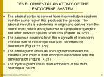 developmental anatomy of the endocrine system1