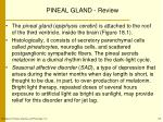 pineal gland review
