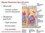 plasma membrane specializations