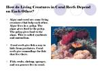 how do living creatures in coral reefs depend on each other