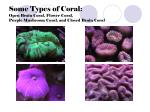 some types of coral open brain coral flower coral purple mushroom coral and closed brain coral