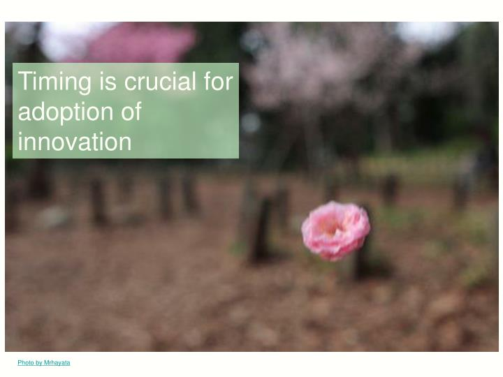 Timing is crucial for adoption of innovation