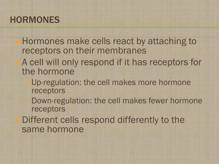 Hormones make cells react by attaching to receptors on their membranes