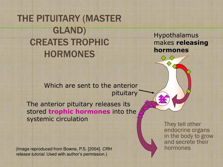 They tell other endocrine organs in the body to grow and secrete their hormones