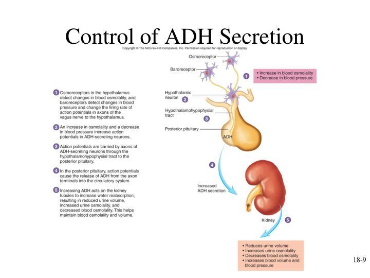 Control of ADH Secretion