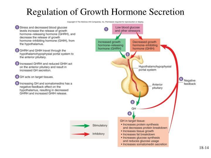 Regulation of Growth Hormone Secretion