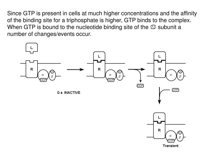 Since GTP is present in cells at much higher concentrations and the affinity of the binding site for a triphosphate is higher, GTP binds to the complex. When GTP is bound to the nucleotide binding site of the