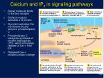 calcium and ip 3 in signaling pathways